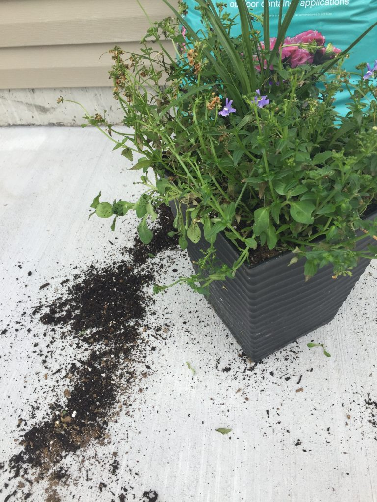 eco scraps potting soil