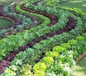 edible garden- how to
