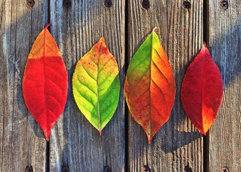 10 Tips to Prepare your Immune System for Fall