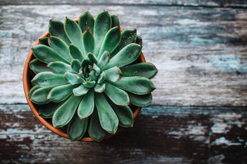 6 Plants To Bring Good Fortune To The House According To Feng Shui